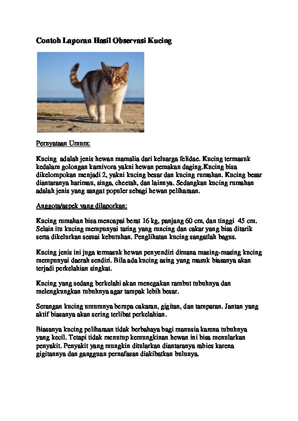 Contoh Teks Laporan Hasil Observasi Tentang Kucing ...