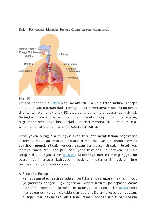 Doc Sistem Pernapasan Manusia Fathimah Ibrahim Academia Edu