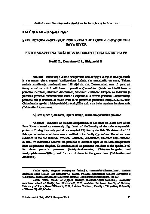Trichodina parazita